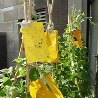 Yellow Sticky Glue Flying Pest Insect Papers Outdoor Traps Catchers Bugs 5PCS U8