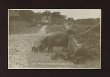 Pig Posted Single Collectable Animal Postcards