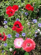Sonder-Angebot WILDBLUMEN  Wiese viele verschiedene Blumensamen ca 30 g