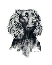 Boykin Spaniel Pencil Drawing 8x10 Art Print by Dj Rogers w/Cert of Authenticity