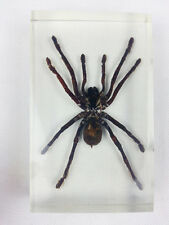 Real Tarantula Bird Spider Insect Specimens In Lucite Paperweight Acrylic Crafts