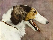 Dog Borzoi Russian Wolfhound, 1930s Color Linen Print by Geoffrey Williams