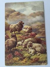 postcard Lambs Lambing Time on the Moors Glasgow and London UK A4
