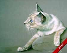 Cute Young Cat W Blue Eyes Off White Javanese Painting Art Real Canvas Print