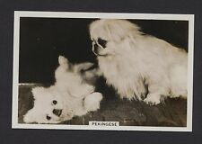 Pekingese from series Dogs by Senior Service Cigarettes card #12