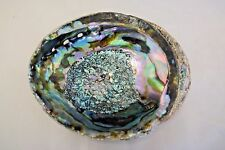 "Green Abalone Sea Shell One Side Polished Beach Craft 7"" - 8"" (1 pc)"