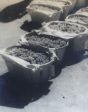 Photographie Henri Gros Dijon Bourgogne Vin Vigne Vendanges années 1930-40 n°74