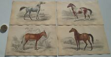 4  DIFFERENT RARE ANTIQUE  1841 HORSE PRINTS - BY CHARLES HAMILTON SMITH