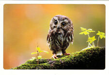 TINY OWL LOOKS VERY SERIOUS Russian Modern postcard