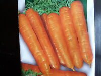 Légumes semences CAROTTE longue de Nantes  Graines 300  Seeds bio de France