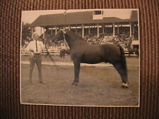"6X Grand Champion Morgan Horse ""Windcrest Donfield"" & John Lydon Original Photo"