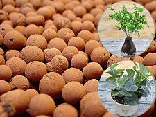 3KG Leca Clay Orchid Hydroponic Grow Media Expanded Clay Balls by Garden Supply