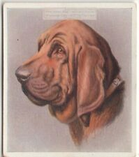 Bloodhound Dog Pet Animal Canine c80 Y/O Trade Ad Card