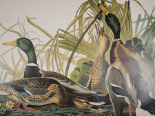 Audubon - Mallard Duck - Birds of America - Ariel Press FOLIO