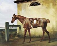 """perfect 24x20 oil painting handpainted on canvas""""race horse """"@15475"""
