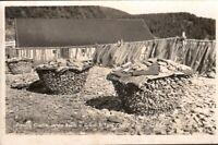 Vintage Postcard, Pressing Codfish on the beach, Gaspe, Quebec Canada