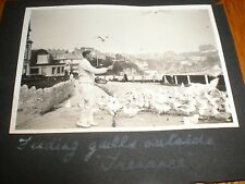 Photo Feeding seagulls outside Trenance Cornwall c1929