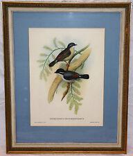 Fine John Gould & HC Richter Framed Vintage Lithograph Asian Bird Art Print