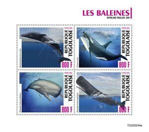 Togo Marine Animals Stamps 2020 MNH Whales Sperm Blue Killer Whale Orcas 4v M/S