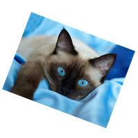 1 Set 5D Diamond Siamese Cat Painting Cross Stitch Kits for Home Ornament