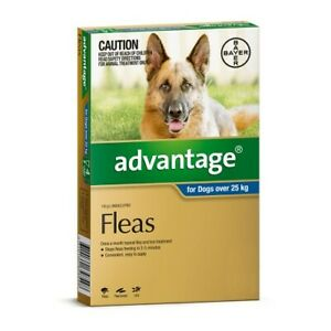 Advantage Flea Treatment for Dogs Extra Large Over 25kg Blue