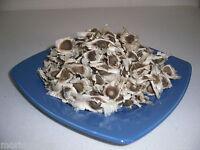 100 echte Moringa PKM1 Samen, frische Ernte 06/2019, PREMIUM Qualität Seeds
