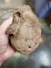 ICE AGE Woolly Mammoth bone fossil super preservation USA fossils AAA MEGA FAUNA