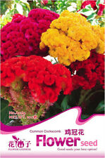 Original Packaging 100 Seeds Celosia Cristata Flower Garden Seeds Hot A064