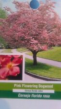 Pink Flowering Dogwood Tree Grow Own Trees Plants Landscape Shade Fruit Flowers