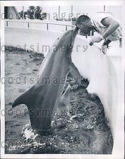 1959 Porpoise With Trainer Seaquarium Miami Florida Press Photo