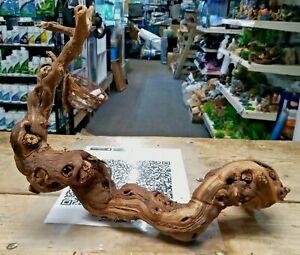 Natural Grapevine Wood detailed ideal shrimp aquarium & vivarium