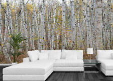 Infinite Birch Forest 15' x 8' (4,57m x 2,44m)-Wall Mural