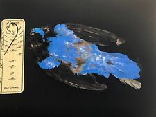 FAIRY BLUEBIRD TAXIDERMY BIRD SKIN  SALMON FLY TYING FISHING