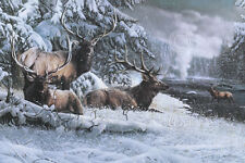 Late Winter Gathering by Kevin Daniel Art Print Wildlife Deer Poster 19x13