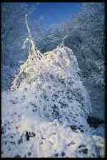 513029 NEVE COPERTA Bush Inghilterra A4 FOTO STAMPA