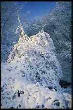 513029 Snow covered Bush England A4 Photo Print