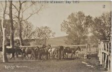 1909 Real Photo-Range Horses, Little Missouri, Gochell Ranch, Morton Co. (N.Dak)