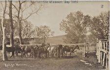 1909 Real Photo-Range Horses, Little Missouri, Gochell Ranch, Morton Co. (N.Dak)