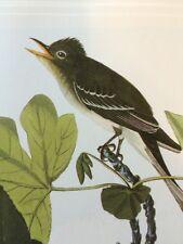 Trails Fly Catcher Audubon Bird Print Picture Poster