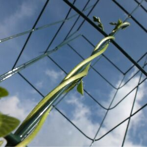 Wall Plant Support Trellis Mesh Flexigro For Climbing  Climbers Clematis Panel