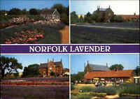Great Britain Multi-View Postcard of Norfolk Lavender Postkarte mit Strichcode