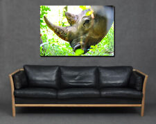 Rhino Close Up Face Skin Horn Profile Print Canvas Art Room Home Large Grey