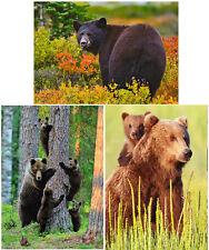 Bears - 3 3D Lenticular Postcard Greeting Cards