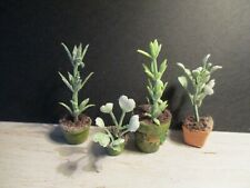 DOLLS HOUSE MINIATURE PLANTS SET B20