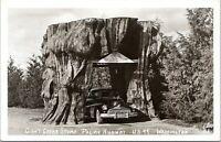 Giant Cedar Stump Pacific Hwy Roadside US 99 Washington 1951 Real Photo Postcard