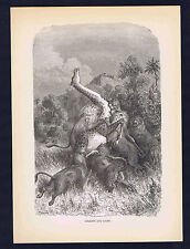 Pride of Lions Attacking a Giraffe in Africa, 1870 Print