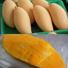 10 Seeds golden mango Nam Doc Mai, Mongo Tree, Tropical Fruit Seeds