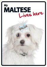 My Maltese Lives Here A5 Plastic Sign