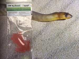 Virides Antaresia Frog Finger Grip Small for Reptile Frog Lizard Python 2pk