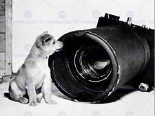 Fotografía vintage coreano Cachorro Perro cartel Art Print BB12982B cámara aérea